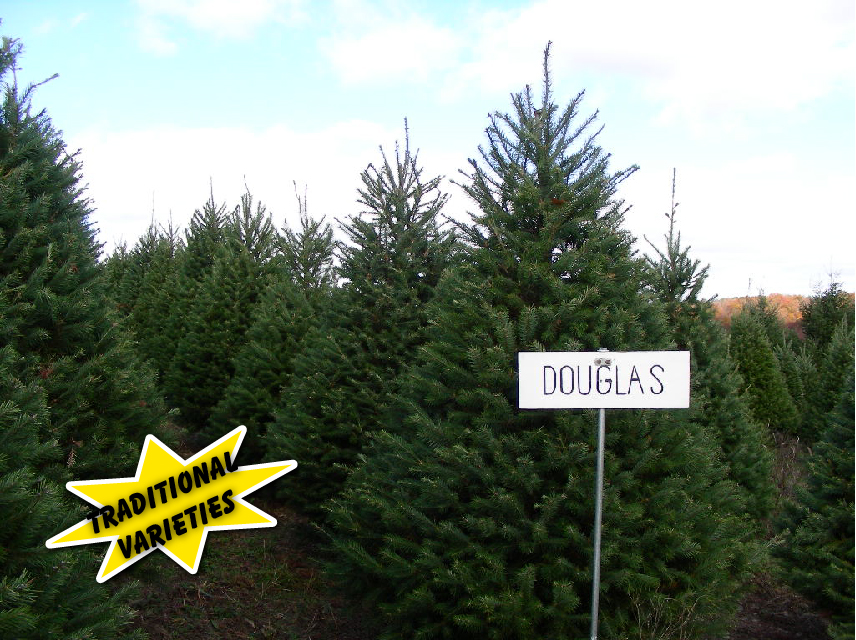 McClellan's Tree Farm, LLC
